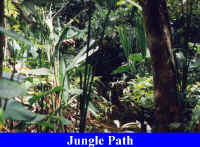 Jungle Path